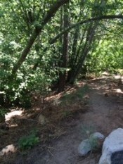 Third Creek by Fitness Trail